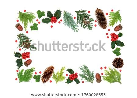 Winter Sonnenwende Weihnachten Grün Grenze Neujahr Stock foto © marilyna