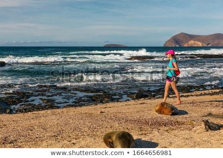 Touristischen Tierwelt Natur Fotografen Fuß Strand Stock foto © Maridav
