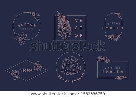 Dizayn elemanları örnek vektör yaprak çerçeve Stok fotoğraf © yo-yo-