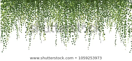 background of lush green ivy leaves on a brick wall stock photo © dsmsoft