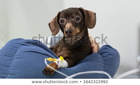 Intravenoso quatro médico preto tabela saúde Foto stock © Pruser