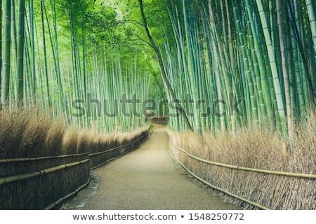 Bambusz széles látószögű bent erdő természet levél Stock fotó © smithore