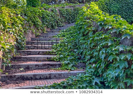 old garden with steps and ivy stock photo © julietphotography