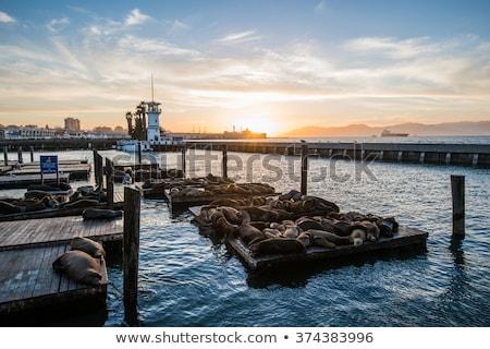 móló · tenger · San · Francisco · USA · város · utazás - stock fotó © jewhyte