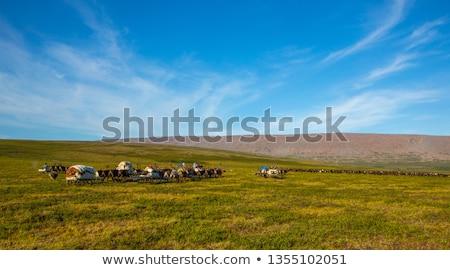 Caribou Caravan Stock photo © michelloiselle