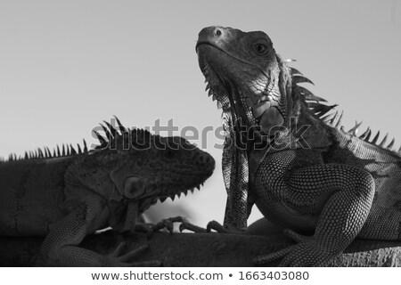 Dinosaur Duo Stock photo © michelloiselle
