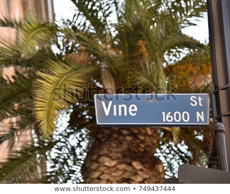 Vine Street Stock photo © cboswell