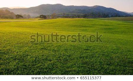 Mountain by green grass Stock photo © Witthaya