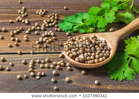 コリアンダー 種子 辛い 空っぽ タグ ボウル ストックフォト © lidante