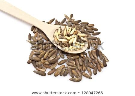 Pine noten type vruchten shell zaad Stockfoto © ribeiroantonio
