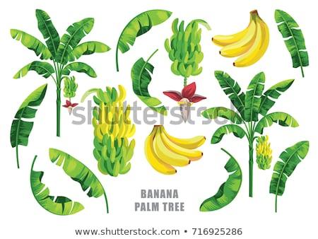 banán · zöld · napos · levél · konzerv · víz - stock fotó © tannjuska