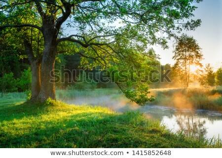 Misty mattina fiume acqua albero foresta Foto d'archivio © pashabo