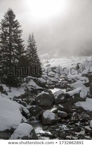 Snow covered pine trees on the side of a river in the winter. stock photo © DonLand