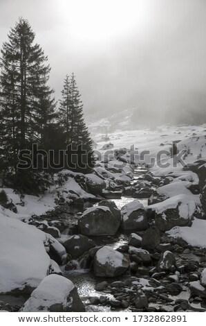 sneeuw · gedekt · pine · bomen · kant · rivier - stockfoto © DonLand