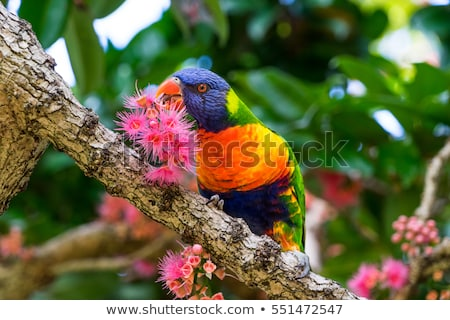 Botanical Garden And Birds Stock photo © LittleLion