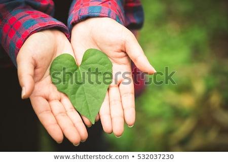 зеленые · листья · сердце · изолированный · белый · любви · природы - Сток-фото © dolgachov