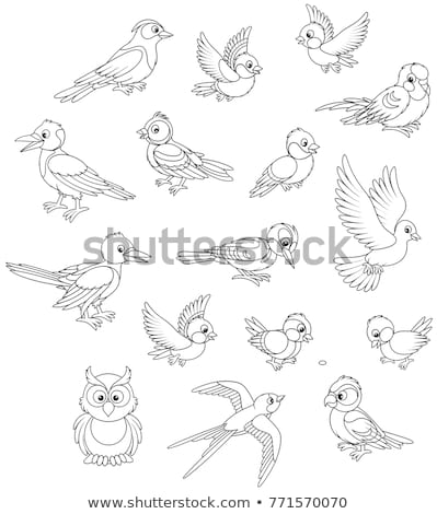 colored birds set stock photo © lordalea