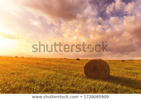 Colheita feno campo céu árvore comida Foto stock © taden