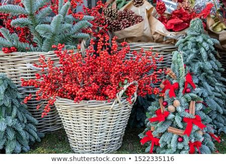 Foto d'archivio: Blu · abete · rosso · ramo · rosso · isolato