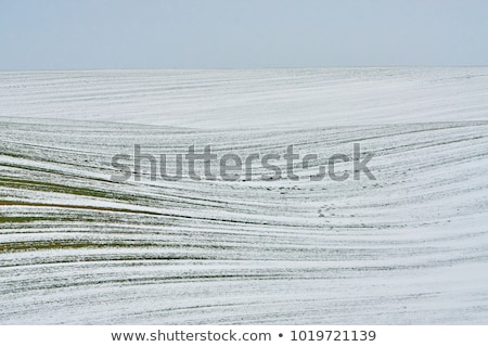 Furrows in a field after plowing it.  Stock photo © ryhor
