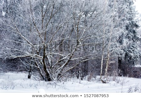 Mroźny drzew drzewo wody lustra niebo Zdjęcia stock © mady70