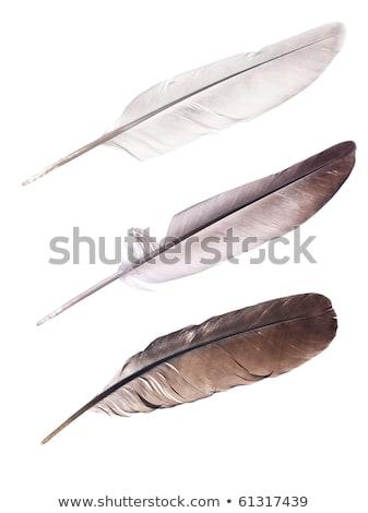 Сток-фото: голубь · белый · искусства · птица · Дать
