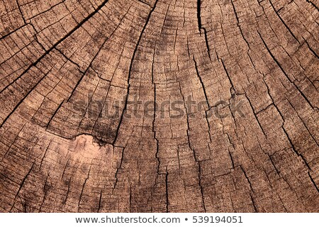 Texture Of Tree Stump  Stock photo © saddako2
