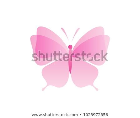 Rosa borboleta logotipo da empresa arte voar animal Foto stock © shawlinmohd