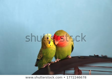 Chuchotement amour nature vert plumes Homme Photo stock © shawlinmohd