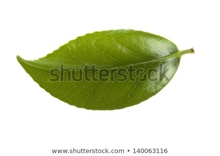 Stok fotoğraf: Taze · çay · yaprakları · beyaz · yaprak · içecekler
