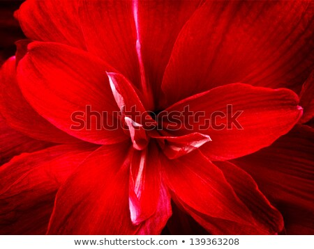 Közelkép liliom fehér stúdió természetes világítás Stock fotó © pictureguy