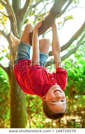 boys hanging from branch of tree Stock photo © mady70