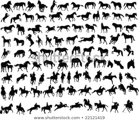 lovak · sziluett · ló · öt · különböző · kő - stock fotó © ntnt