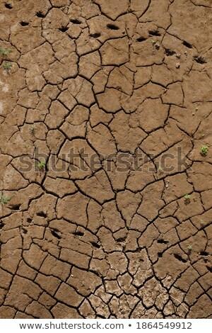 Fissuré rivière lit peuvent utilisé Photo stock © Freila