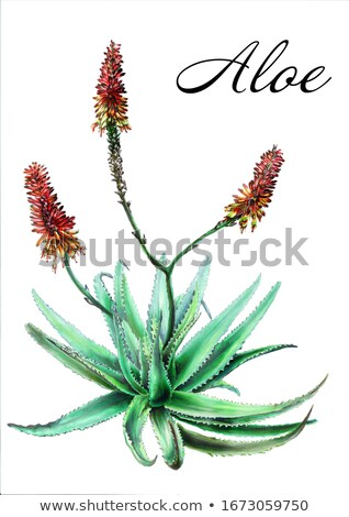 Plant and Flower Gel Stock photo © homydesign