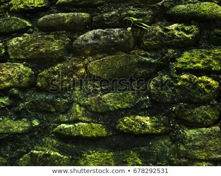 Old mossy stonewall Stock photo © olandsfokus