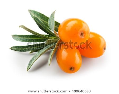 ramo · maduro · branco · natureza · fruto - foto stock © mady70