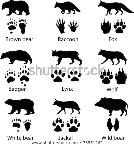 brown bear footprint Stock photo © taviphoto