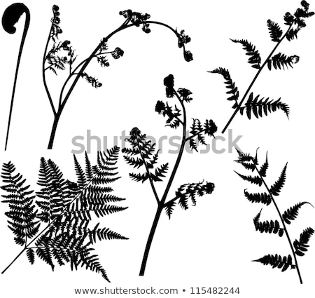 Stock photo: Set of fern frond silhouettes.