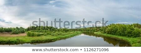 reed grass in backwater under blue sky Stock photo © meinzahn