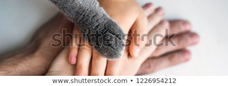 Cat paw on human hand Stock photo © simply