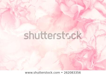 çiçek yumuşak pastel renk bulanıklık stil Stok fotoğraf © balasoiu