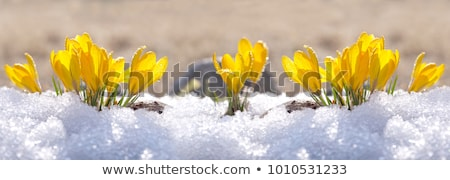 Panorama primavera inverno casa árvore sol Foto stock © MyosotisRock