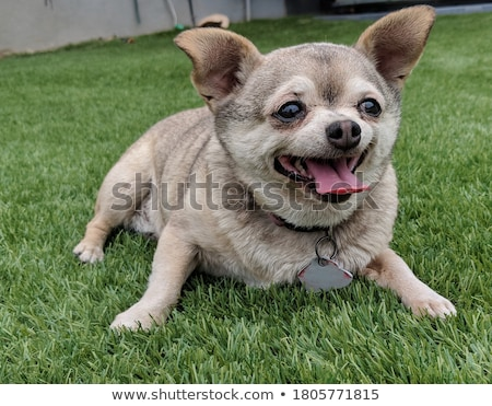 Iç sıçan köpek siyah kadın dostluk Stok fotoğraf © cynoclub