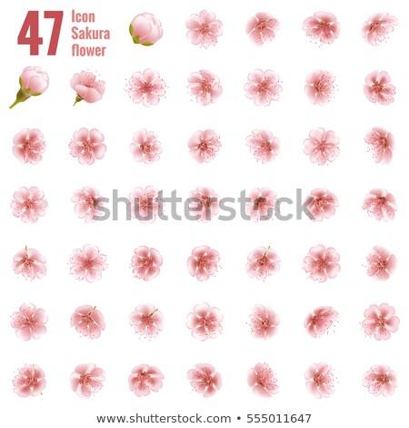 Sakura cseresznye ikon gyűjtemény virág eps 10 Stock fotó © beholdereye