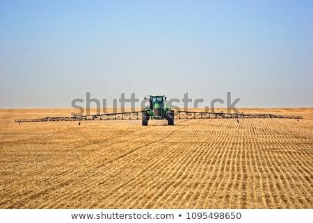 canola and flax fields in saskatchewan stock photo © pictureguy
