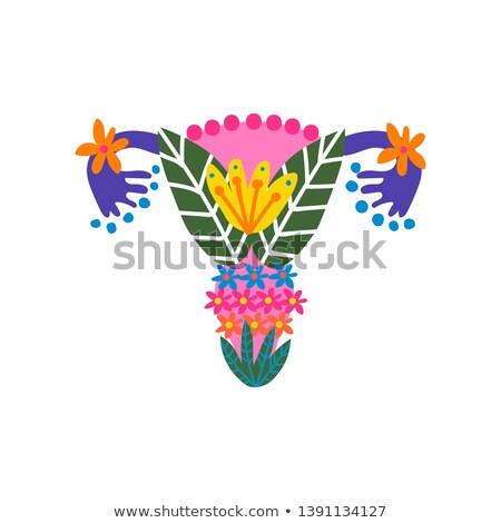 womb beautiful bright design reproductive organs bright colors stock photo © tefi