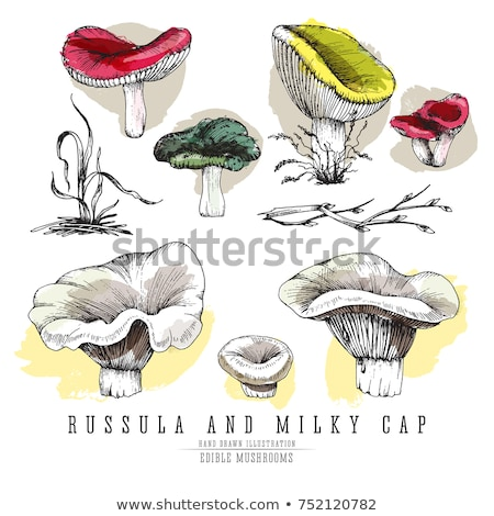 ink and watercolor sketch of a mushroom stock photo © cidepix