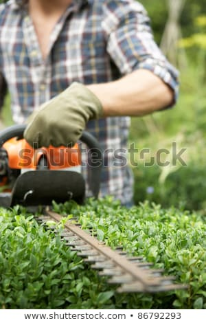 Man trimming hedge Stock photo © IS2