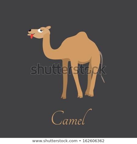 Vektör karikatür siluet deve ikon sevimli Stok fotoğraf © NikoDzhi